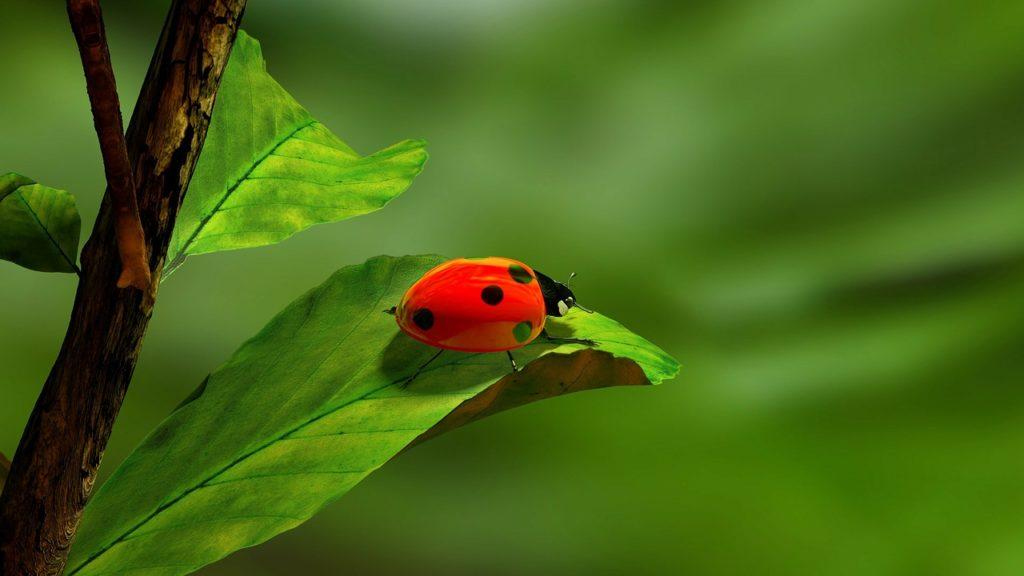 ladybird-163480_1280