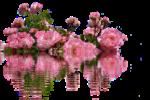 roses-2111550_1280