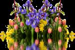 spring-2393429_1920