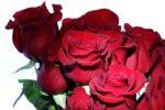 rose_1_!
